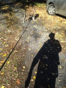 dog with shadow of man
